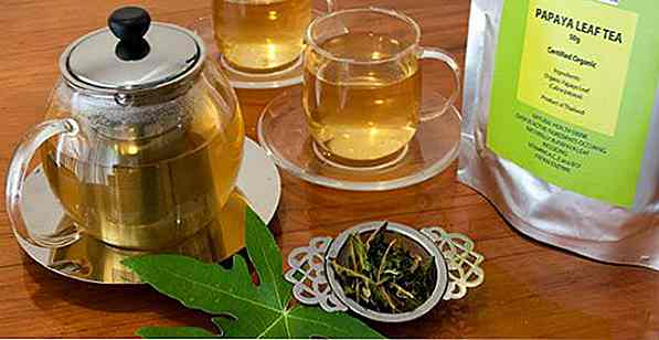 Papaya Leaf Tea Thin?  Che cosa serve, vantaggi e come